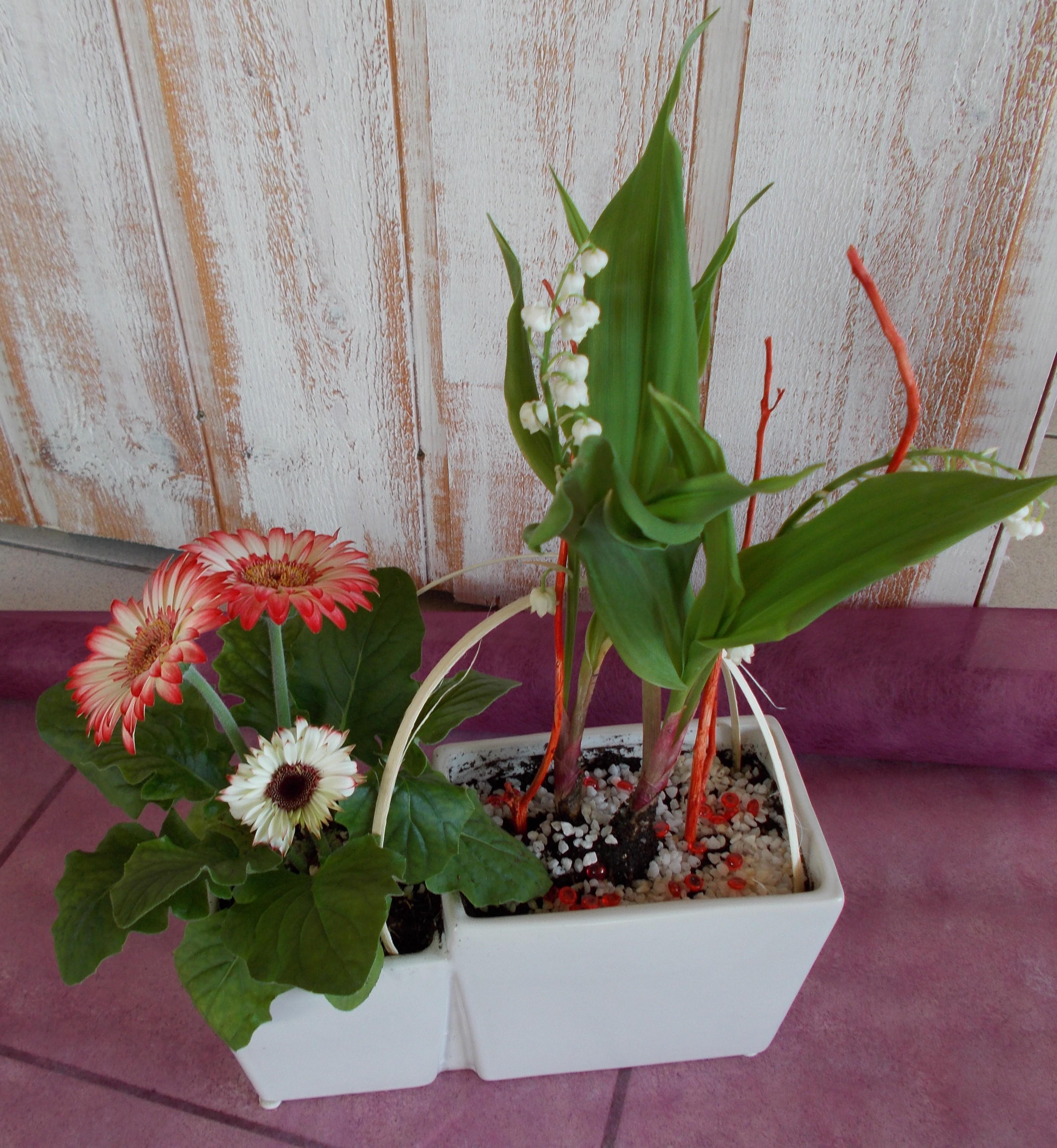 Le muguet porte-bonheur | Fleurs de Riez