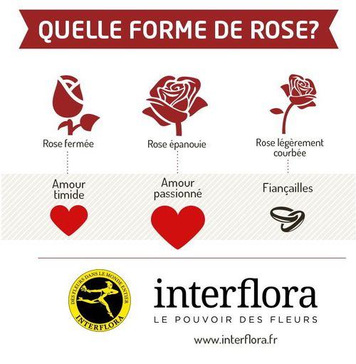 La rose fleur pr f r e des fran ais fleurs de riez - Signification des roses rouges ...